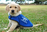 Leamington Spa & Guide Dog Training School