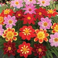 Malvern Spring Flower Festival